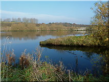 SJ6888 : Bollin Point, Manchester Ship Canal, Lymm by Anthony O'Neil