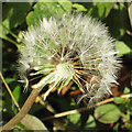 SE7365 : Wind-assisted seed dispersal by Pauline E