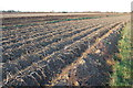 TR0122 : Harvested Crop Field on Romney Marsh by Julian P Guffogg