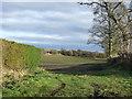 NZ3134 : Farmland, Cornforth by JThomas