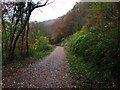 ST1891 : Autumn in Sirhowy Valley Country Park by John Light