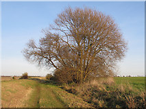 TQ9293 : Willow tree behind the embankment by Roger Jones