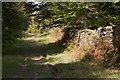 SD3578 : The Cumbria Coastal Way in Howbarrow Plantation by Tom Richardson