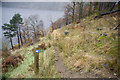 NY3118 : Thirlmere Circuit footpath by Tom Richardson