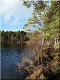 NH9718 : Loch Garten by Walter Baxter