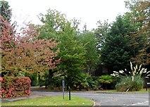 TQ1463 : Lakeside Drive, Esher by nick macneill