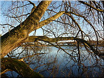 NT6578 : East Lothian Landscape : An Autumn Morning At Seafield Pond by Richard West
