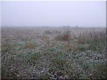 NZ2811 : Farmland, North Oxen-le-Fields by JThomas