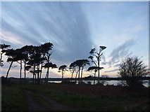 NT6378 : Coastal East Lothian : On Track At Hedderwick by Richard West