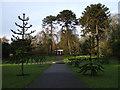 TA2069 : Monkey puzzle trees (Araucaria araucana), Sewerby Park by JThomas
