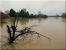 SO8832 : Tewkesbury Abbey - above the floods, 1 by Jonathan Billinger
