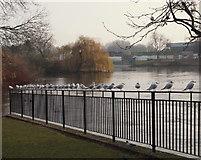SK3536 : Derby - River Derwent by David Hallam-Jones