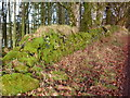 NM8602 : Old wall at Ederline by sylvia duckworth
