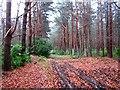 NT5980 : Ride, Binning Wood by Richard Webb