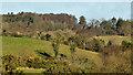 J3958 : Drumlins and woodland, Saintfield by Albert Bridge