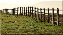 J4482 : Coastal fence near Helen's Bay by Albert Bridge