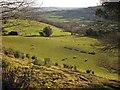 ST2500 : Sheep, Nower Farm by Derek Harper