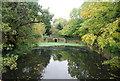 TQ3798 : Swan and Pike Pool by N Chadwick