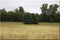 TM2239 : Two trees, Brokes Hall by N Chadwick