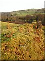SX5077 : Field boundary by the West Devon Way by Derek Harper