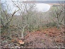 NR9666 : Woodland above Ostal Bay by Richard Webb