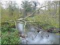 SP2178 : River Blythe near Barston Bridge by Nigel Mykura