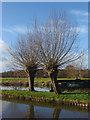 TQ0155 : Willow pollards, River Wey by Alan Hunt