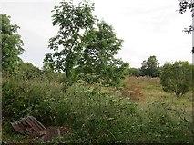G8132 : Wetland woodland by Richard Webb