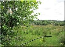 G4916 : Field, Cloonacool by Richard Webb
