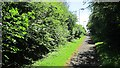 NZ2981 : Path to Cowpen by Richard Webb