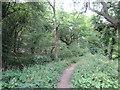 TF0722 : Woodland path by Bob Harvey
