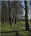 TL6254 : Brinkley: winter sunlight by John Sutton