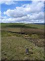 NY8319 : Boundary stone No. 42 by Trevor Littlewood
