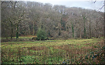 SS9086 : Woodland in the lower Garw Valley by eswales