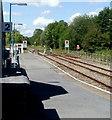 SN6322 : Walking across Llandeilo railway station level crossing by Jaggery
