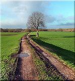 SE3724 : Foxholes Lane, Altofts by derek dye
