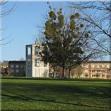 TL4359 : Mistletoe and the Møller Centre by John Sutton
