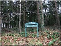 SS6710 : Flashdown Wood by Alex McGregor