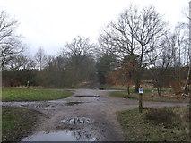 TQ2372 : Inner Park Ride crosses Ladies Ride, Putney Heath by David Anstiss