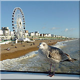 TQ3103 : Brighton beach and seafront, with gull and wheel by Roger  Kidd