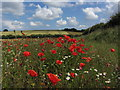 TF7533 : Field lined with poppies by Pump House, Bircham Newton by Colin Park