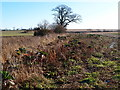 TL0267 : Game bird cover near the Three Shires Way by Michael Trolove