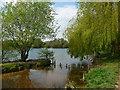 SU3646 : Andover - Anton Lakes by Chris Talbot