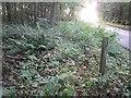 NT7531 : Kelso FBM by Richard Webb