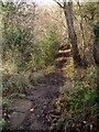 NZ8306 : Esk Valley Walk in Dorsley Bank Wood by Derek Harper