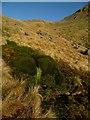 NY4209 : Mossy Fall by Michael Graham