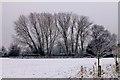 SK5236 : Snowy poplars by David Lally