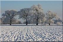 TL8063 : Sentinels in the snow by Bob Jones