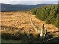 NR9821 : Forest edge, Kilbride Hill by Richard Webb