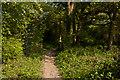 TQ3347 : Woodland strip by Ian Capper